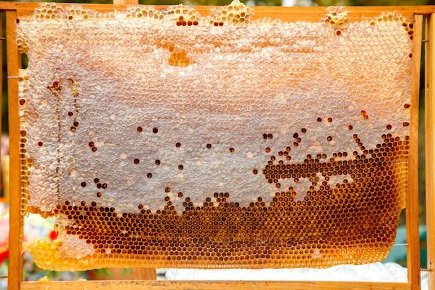 As abelhas trabalham em favo de mel com mel doce Foto Premium