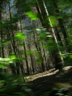 As árvores estão vivos Foto gratuita