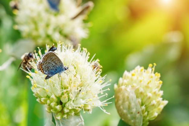 As borboletas sentam-se em flores em um fundo natural verde Foto Premium
