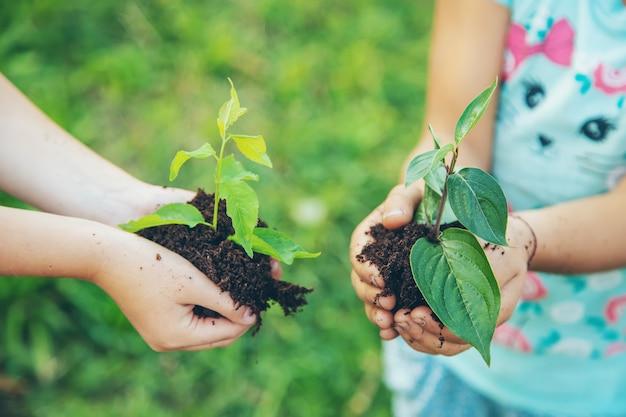 As crianças plantam plantas juntas nas mãos. Foto Premium