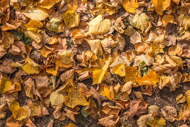 As folhas caídas no parque Foto Premium