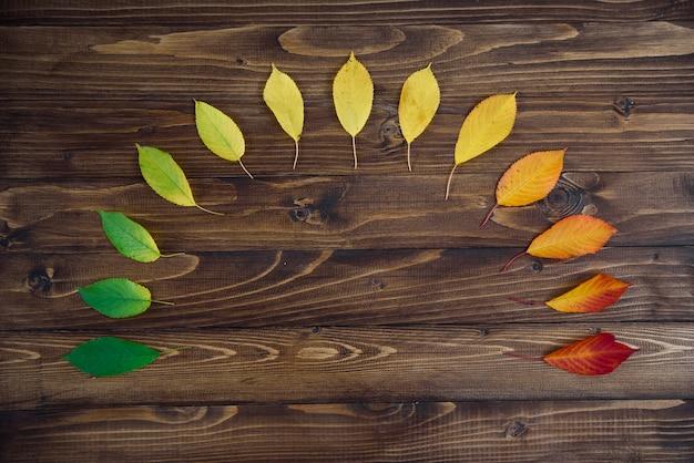 As folhas de outono dispostas em um semicírculo passam de verde para vermelho em um fundo de madeira. o conceito de mudar a estação. Foto Premium