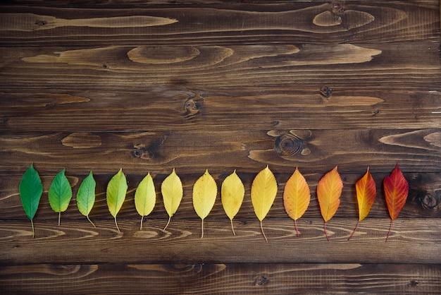 As folhas de outono dispostas em uma tira passam de verde para vermelho em um fundo de madeira. o conceito de mudar a estação. Foto Premium