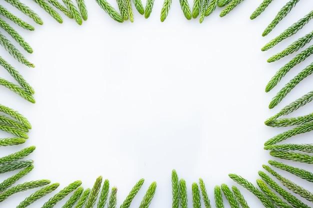 As folhas moldam para o texto no fundo branco isolado. Foto Premium