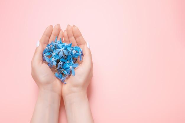 As mãos da beleza de uma mulher com flores azuis encontram-se na tabela, fundo cor-de-rosa. produtos cosméticos naturais e cuidados com as mãos, hidratação e redução de rugas, cuidados com a pele Foto Premium