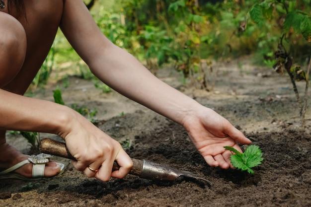 As mãos das mulheres colocam um broto no solo Foto Premium