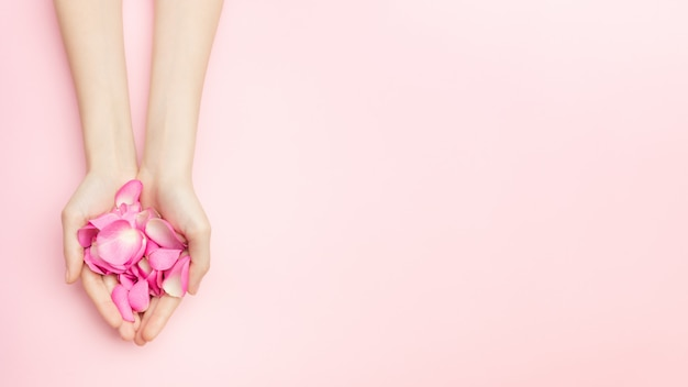 As mãos de mulher segurar flores rosas em um fundo rosa. um pulso fino e manicure natural. cosméticos para cuidados com a pele sensíveis. cosméticos de pétalas naturais, cuidados com as mãos anti-rugas. Foto Premium