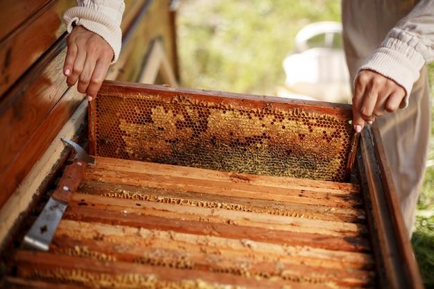 As mãos do apicultor retiram da colméia uma moldura de madeira com favo de mel. colete mel. apicultura. Foto Premium