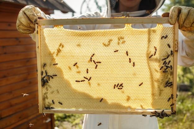 As mãos do close up do apicultor prendem o quadro de madeira com favo de mel. Foto Premium