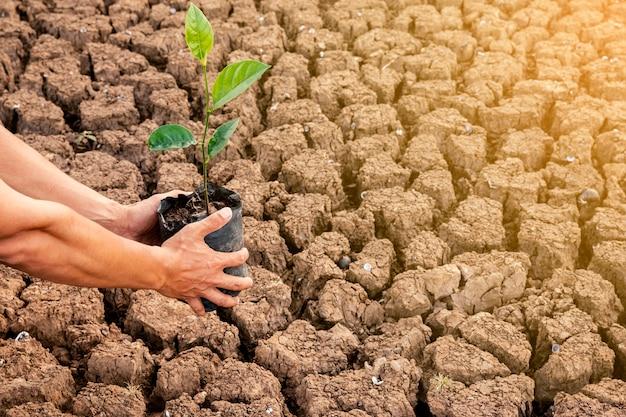 As mãos dos homens plantam árvores em áreas secas. o solo está quebrado no ar quente. e tem espaço para entrada de texto Foto Premium