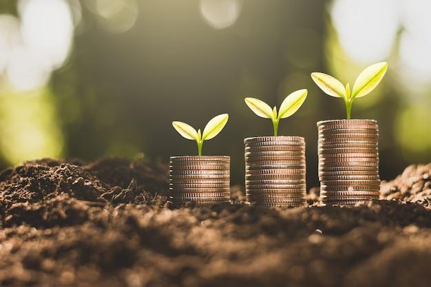 As moedas estão empilhadas no chão e as mudas estão crescendo em cima. Foto Premium