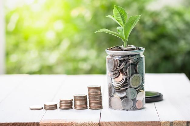 As moedas que empilham com a planta crescente na hortaliças borraram o fundo e a luz solar. Foto Premium
