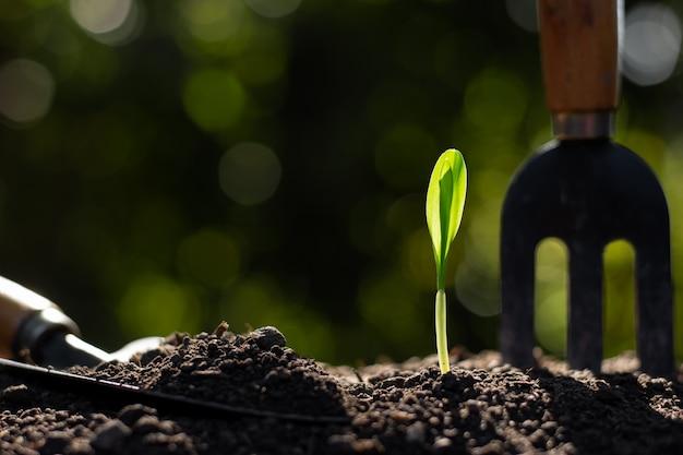 As mudas de milho estão crescendo a partir do solo, o conceito de agricultura. Foto Premium