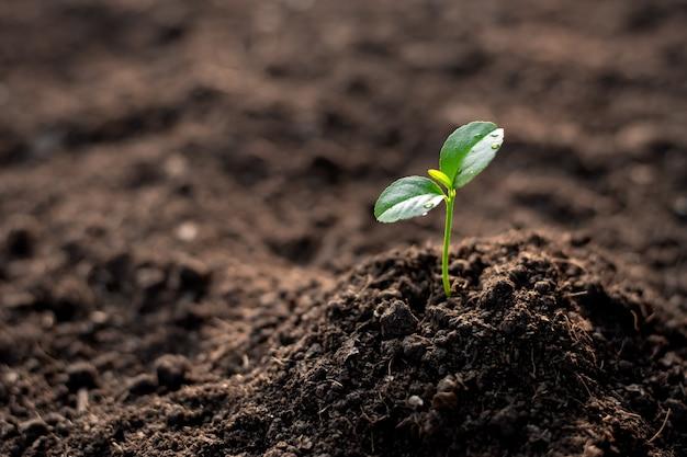 As mudas estão crescendo a partir do solo fértil. Foto Premium