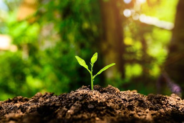 As mudas estão crescendo no solo e na luz do sol. Foto Premium