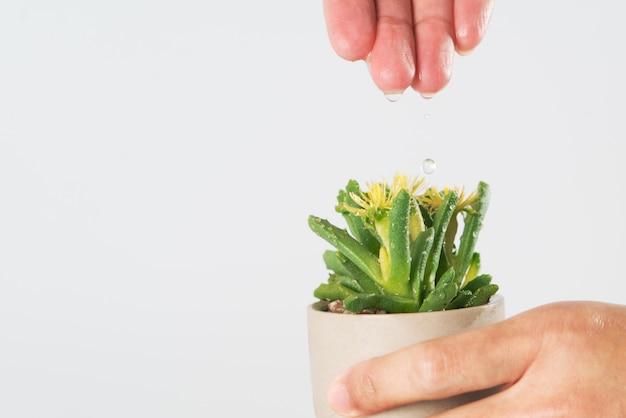 As mulheres mão soltar a água para a pequena árvore ou cacto Foto Premium