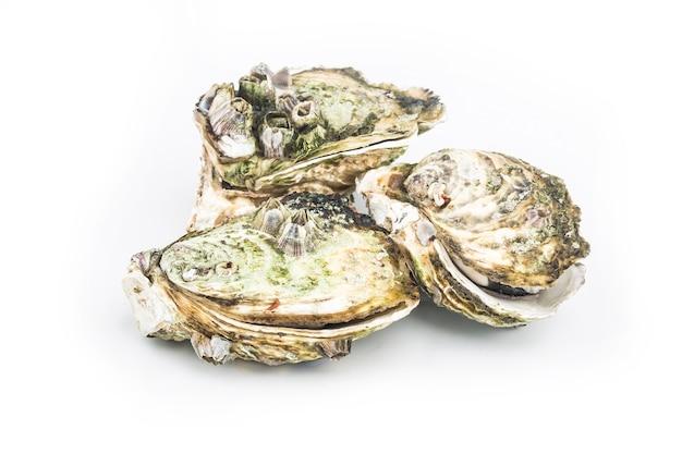 As ostras cozidas no vapor são colocadas nas costas brancas Foto gratuita