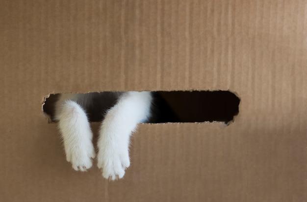 As patas do gato branco estão espreitando para fora do buraco na caixa de papelão. espaço da cópia Foto Premium