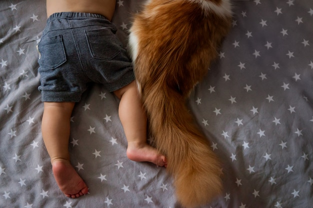 As pernas de um menino e a cauda de um gato. amizade de uma criança com um animal. menino, criança, dormindo em um abraço com um gato. animal de estimação favorito. Foto Premium