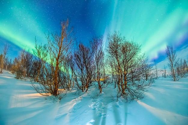 Aurora boreal na neve e árvore Foto Premium