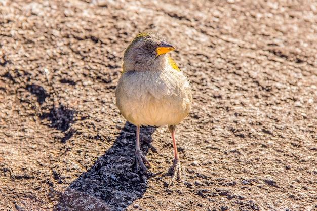 Aves brasileiras ao ar livre Foto Premium