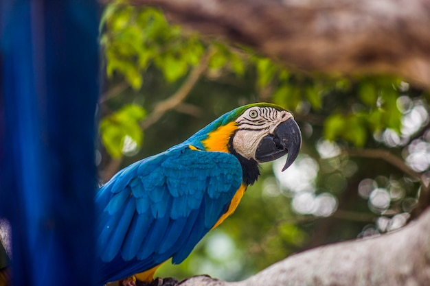 Resultado de imagem para aves brasileiras