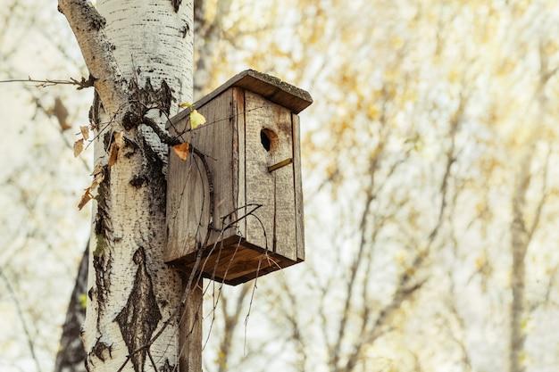 Aviário de madeira na árvore na floresta do vidoeiro. Foto Premium
