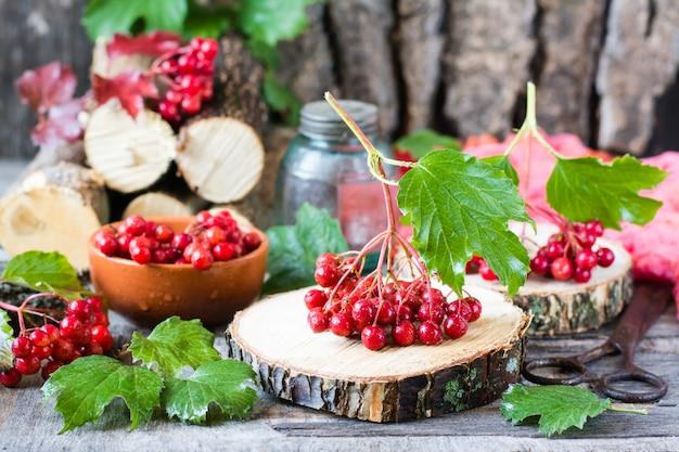 Bagas maduras de viburnum em um galho com folhas Foto Premium
