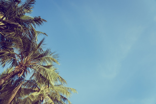 Baixo ângulo, bonito, coqueiro, com, céu azul, fundo Foto gratuita