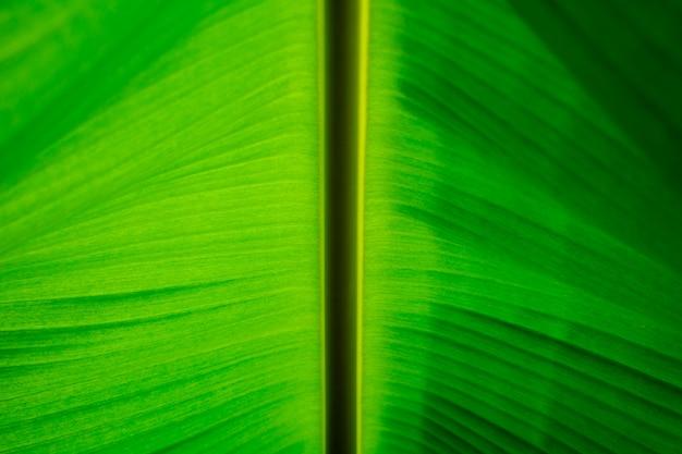 Banana verde deixa a textura Foto Premium