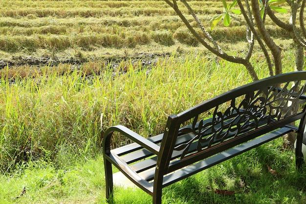 Banco de ferro forjado preto sob a árvore pelo campo de arroz na temporada de colheita Foto Premium
