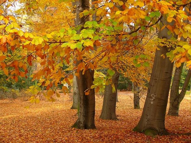 banco de jardim vetor:Banco de jardim parque árvore folha de outono
