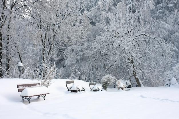 Bancos de madeira cobertos de neve perto das árvores no terreno coberto de neve Foto gratuita