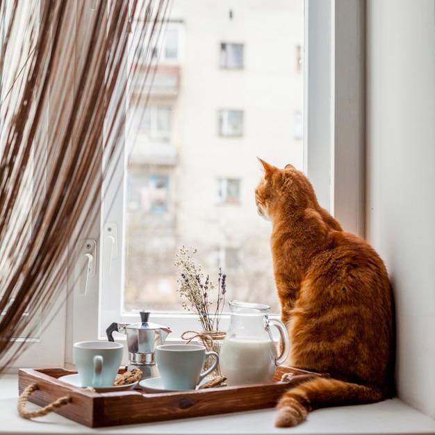 Bandeja de café da manhã com um gato Foto gratuita