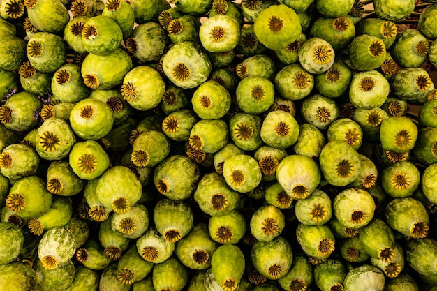 Bando apertado de cabeças verdes de papoula Foto Premium