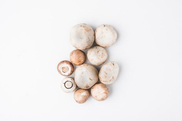 Bando de deliciosos cogumelos Foto gratuita