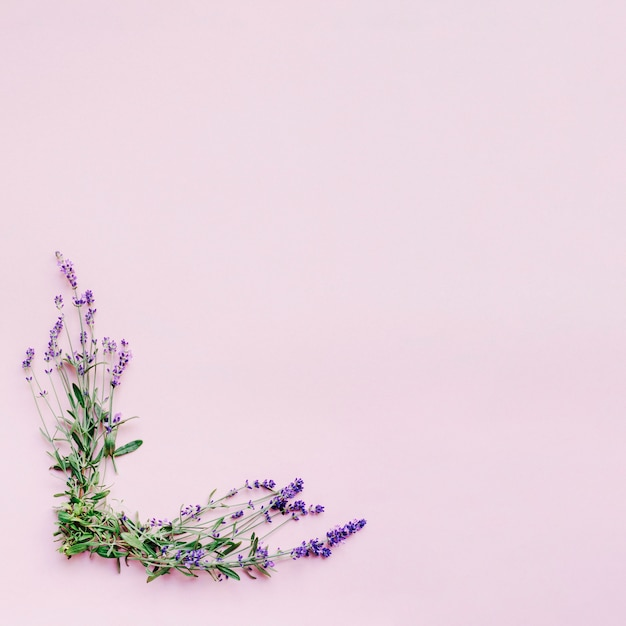 Bando de flores de lavanda delicada, formando o quadro no fundo rosa Foto gratuita