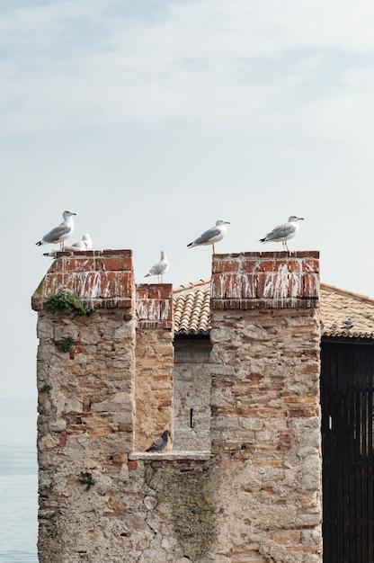 Bando de gaivotas sentar no telhado de telha Foto Premium