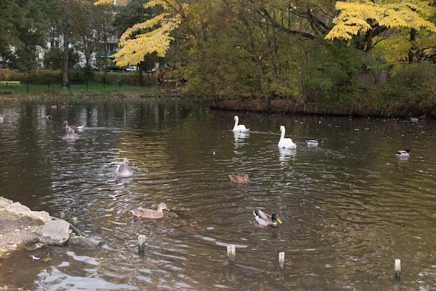 Bando de gansos brancos e marrons em verde Foto Premium