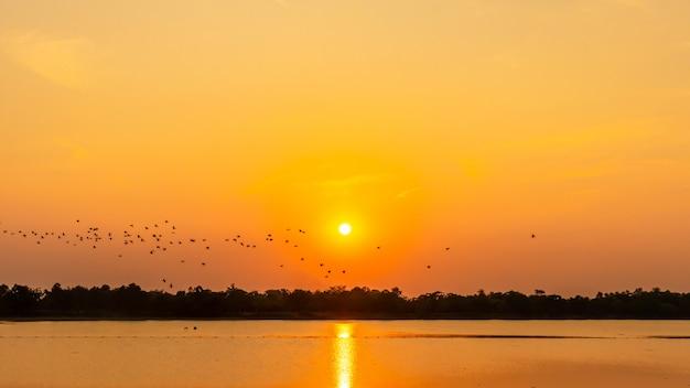 Bando de pássaros no reservatório, sombra do pôr do sol, gaivota Foto Premium