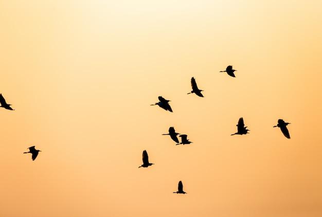 Bando de pássaros silhueta no céu ao pôr do sol Foto Premium