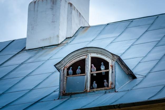 Bando de pombos no telhado. pombas se reunindo no sótão antiquado. pombos perto da janela da mansarda da velha casa. Foto Premium