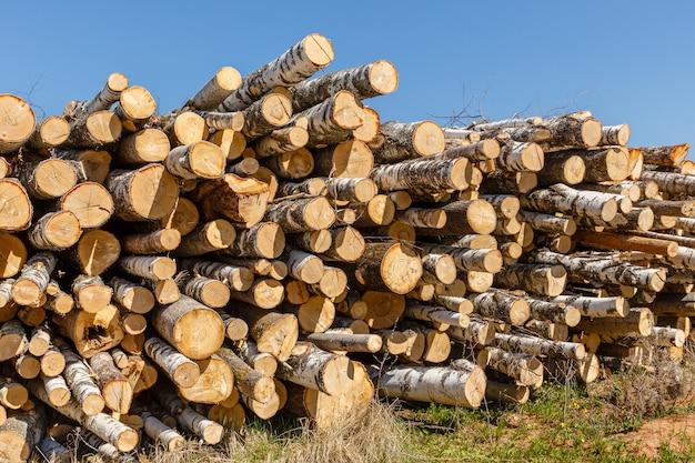 Bando de troncos empilhados. Foto Premium