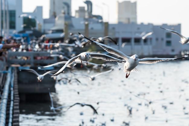 Bang pu e visitantes alimentando milhares de gaivotas Foto Premium