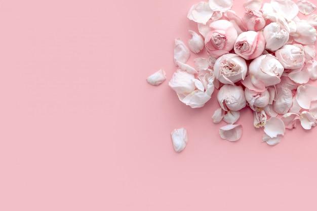 Banner com delicadas rosas e pétalas deite-se sobre um fundo rosa claro, vista plana, vista superior Foto Premium