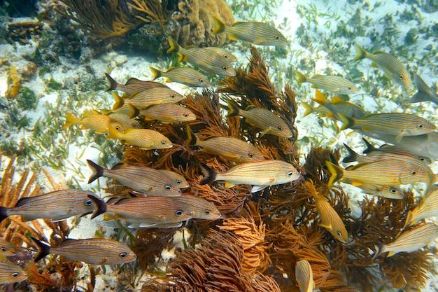 Barreira mesoamericana grande recife maia Foto Premium