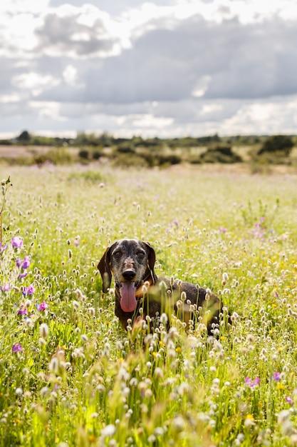 Bassê no meio de um campo de flores em um dia ensolarado Foto Premium