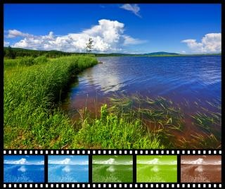 Beaver brook amostrador filme colorido Foto gratuita