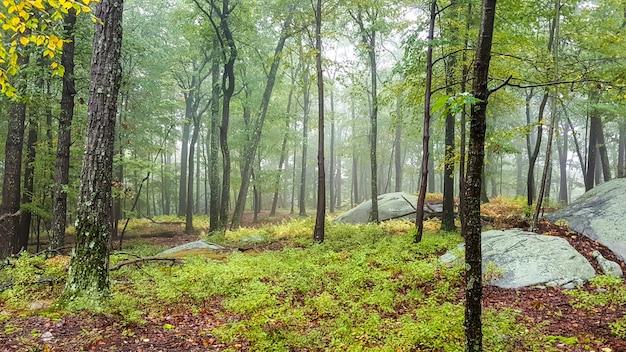Bela área em uma floresta com árvores altas Foto gratuita