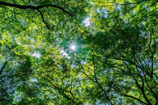Bela árvore verde e folha na floresta com sol Foto gratuita